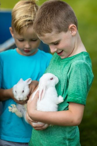 Two boys each holding white bunnies