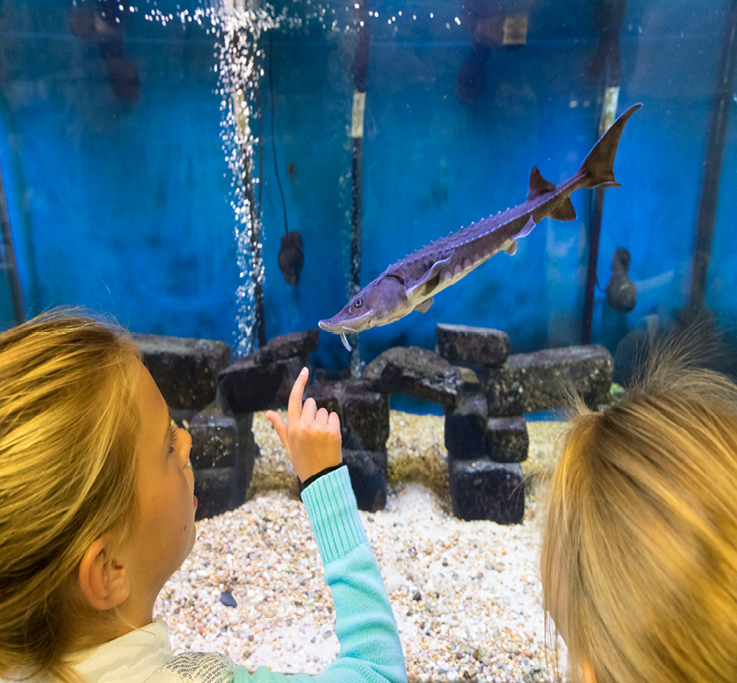 Two girls looking at a baby sturgeon in a fish tank.