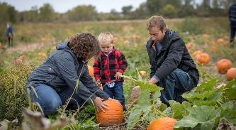 Parents with little boy picking out a pumpkin in the field at Polly's Pumpkin Patch